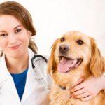 Responsabilidad y beneficios al tener una mascota